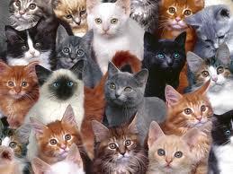 gatto tess